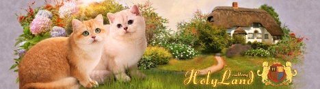 Питомникбританских кошек Holyland